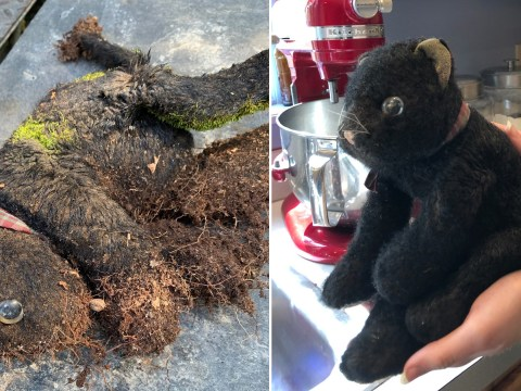 Woman finds daughter's soft toy in the woods, 14 years after she lost it – and it still looks perfect