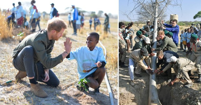 Prince Harry helps plant huge tree as royal Africa tour hits Botswana