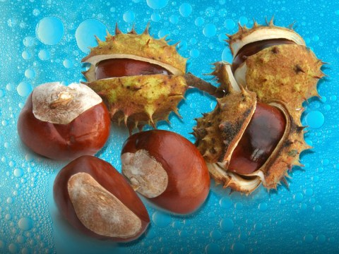 Woman shares how you can make laundry detergent with conkers