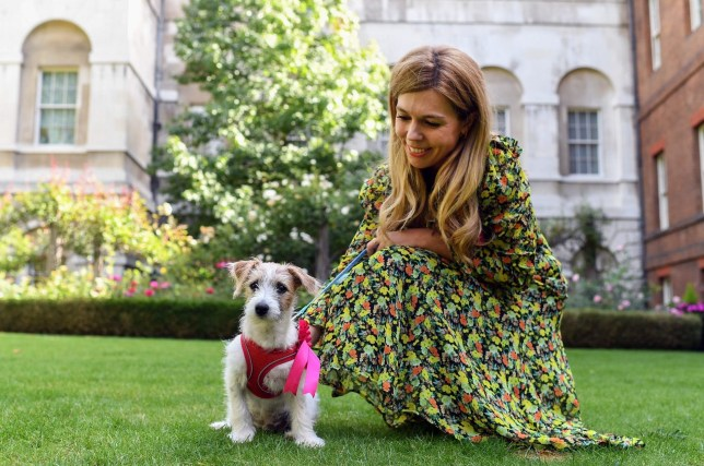 Carrie Symonds with dog Dillon at No 10