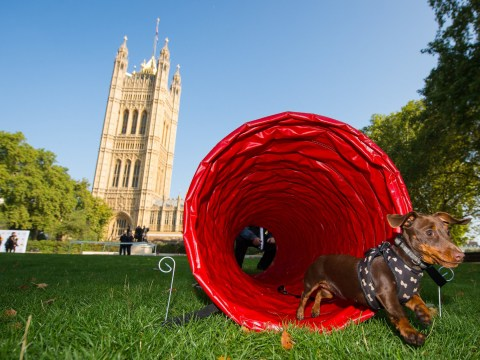 Westminster Dog of the Year cancelled for second time amid Brexit protests