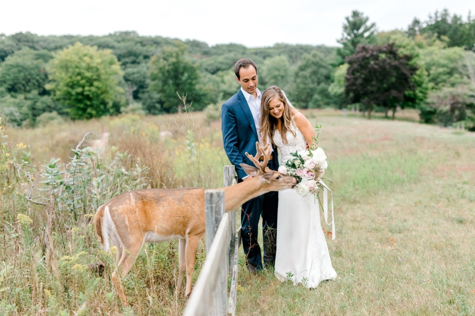 deer photobombs newlyweds wedding photoshoot to steal the bouquet