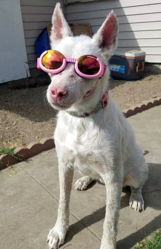 Zoe in her doggles