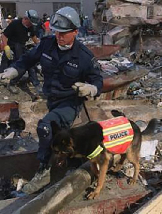 Hero dogs of 9/11 - TRAKR