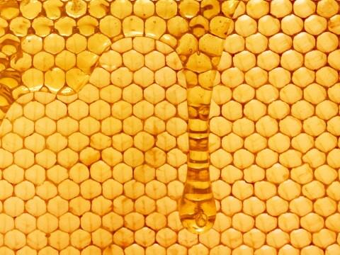 Doctors rebuild split penis using honey
