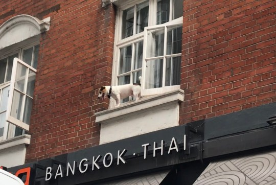 Dog in a spot of bother in Soho Provider: Twitter/ZoraSuleman