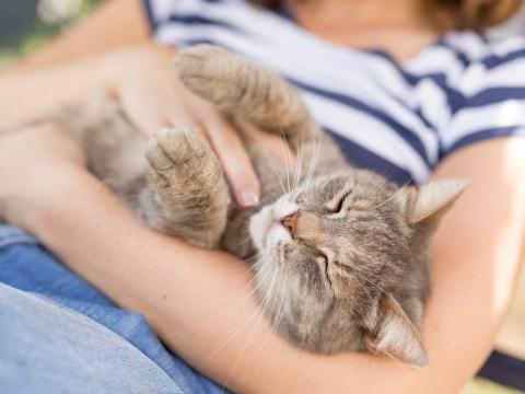 Cats love their owners just as much as dogs do, study finds