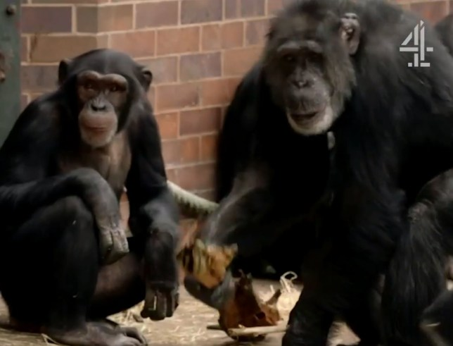 Boy told his mum he wanted to rape her Secret Life of the Zoo Picture: Channel 4