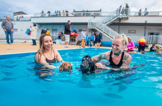 Slinky the two-year-old dachshund and Sanna the one-year-old Afghan Hound brave the pool with owners Chloe McNeill and Arian Forrester. Doggy swim day at Gourock Outdoor Pool. Around 60 dogs with their owners took the plunge and enjoyed the last swim session of the season. Sept 30 2019 . See SWNS story SWSCpool. These adorable pictures show dogs creating a splash in what is believed to be Scotland's first canine swim day. Pet owners got the chance to take a dip with their dogs at Gourock Outdoor Pool in an event launched by operators Inverclyde Leisure. The 'Doggy Swim Day' at the open-air pool - believed to be the first of its kind in Scotland - took place yesterday (Sun) and dozens of dog owners turned up for the social occasion. Stephen McAnally, 43, brought his four and a half old Spanish water dog Ibby to the event which marks the end of summer.