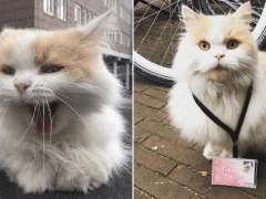 Professor Doerak is the university campus cat with his own ID card