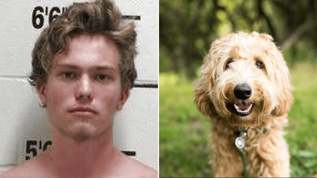 'Animal abuser used ax to hack elderly labradoodle to death'