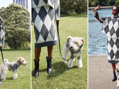 When are the H&M dog and owner jumpers on sale and how much do they cost?