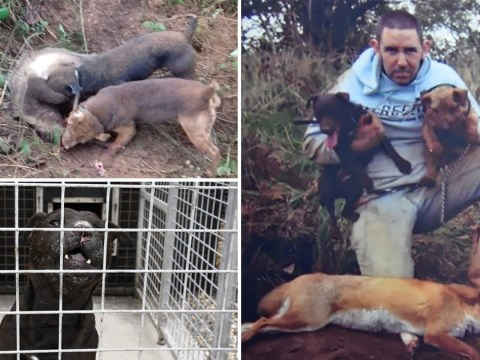 Warning not to sell pets online as thug admits buying cats for his dogs to kill