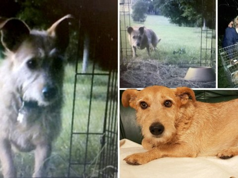 Trio use spy cameras, night-vision goggles and meatballs to find missing dog