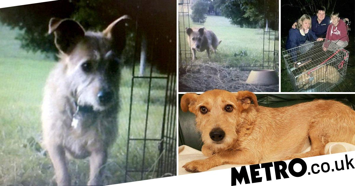 Three women used spy cameras and meatballs to find a missing dog