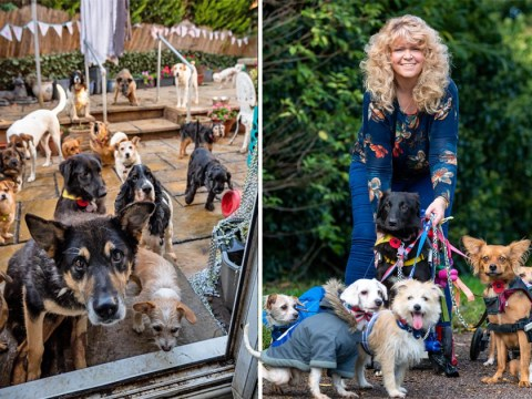 Woman lives with 27 dogs she saved when nobody else wanted them