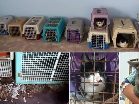 Rescuers in tears after finding 15 cats in 'horrific prison' covered in faeces and urine