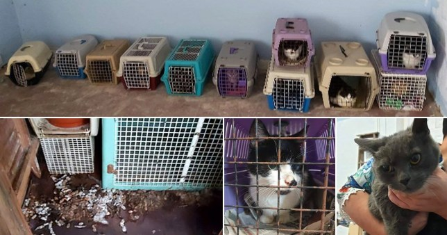 The rescue centre found 15 cats living in 'horrific' conditions