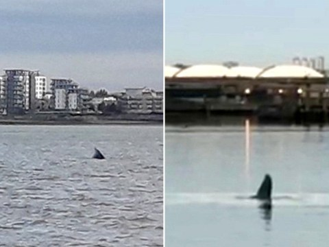 Humpback whale spotted swimming in Thames has died