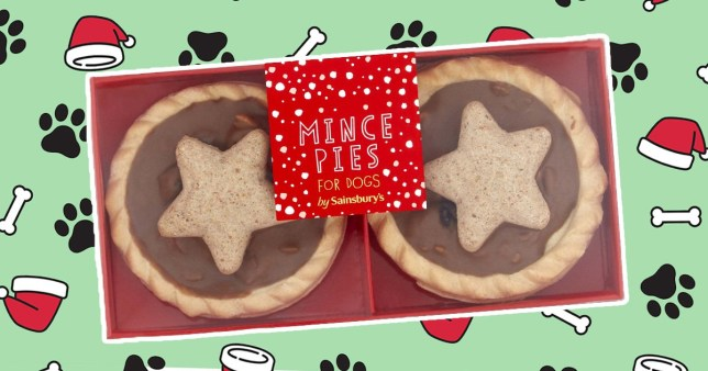 Sainsbury's new mince pies for dogs on a festive background