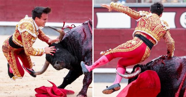 Bullfighter gored