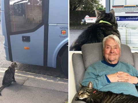 George the cat becomes a star thanks to his solo adventures on buses and trains