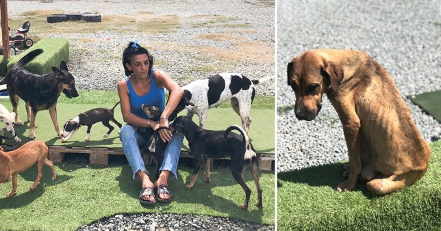 Demitra with a few of her rescue dogs