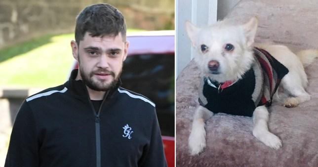 A man threw a pet dog 30 feet out of a window