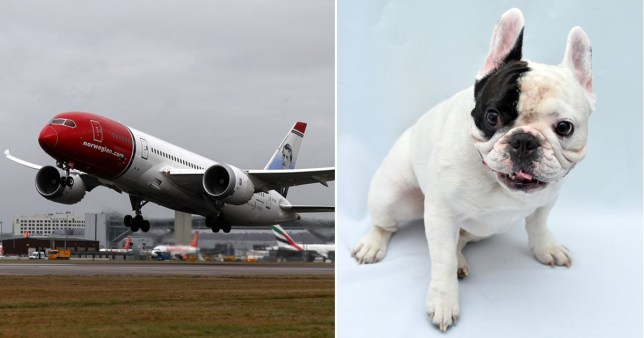 Emotional support dogs in tutus delay flight after getting distressed