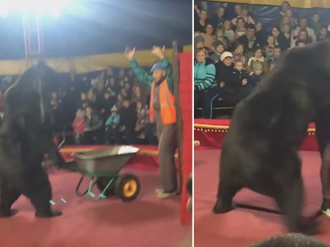 Huge circus bear attacks trainer as 'terrified' families scramble to escape