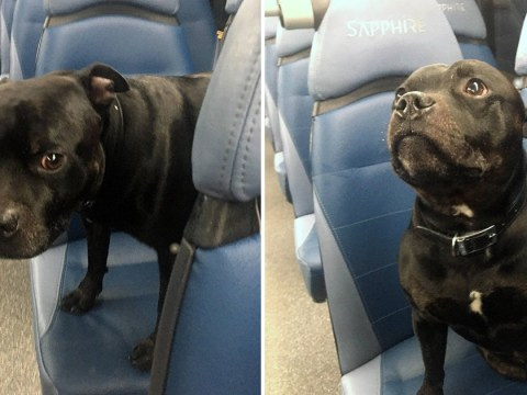 Adventurous dog went on solo bus ride for an hour before anyone noticed