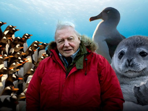 Is David Attenborough a vegetarian or vegan and when is Seven Worlds One Planet next on TV?