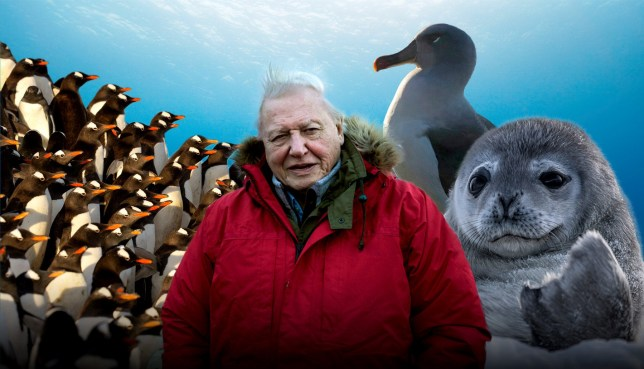 Sir David Attenborough and species that live in Antarctica