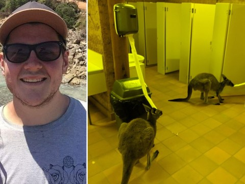 Hilarious moment British backpackers find kangaroos eating their toilet roll