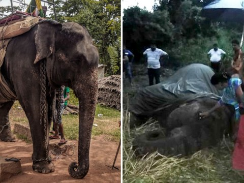 Elephant collapses and dies at popular tourist resort in Sri Lanka