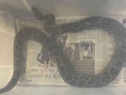 Six foot Python found dumped in Tesco carpark