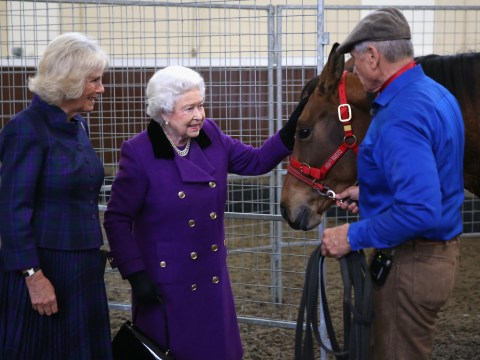 Queen looking for royal horse handler to live in Buckingham Palace