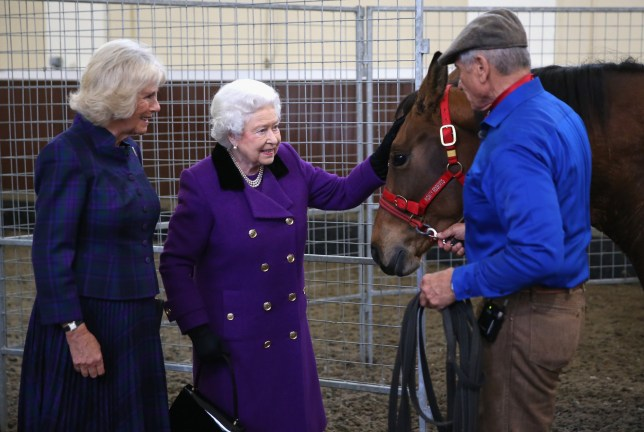 LONDON, ENGLAND - OCTOBER 21: Camilla, Duchess of Cornwall and Queen Elizabeth II attend a horse whispering demonstation by Brooke Global Ambassador Monty Roberts at the Royal Mews, Buckingham Palace on October 21, 2015 in London, England. The Brooke is an international animal welfare charity working to improve the lives of horses, donkeys and mules. (Photo by Chris Jackson-WPA Pool/Getty Images)
