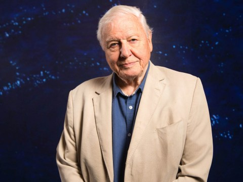 David Attenborough reveals why he doesn't let crew save animals while filming documentaries