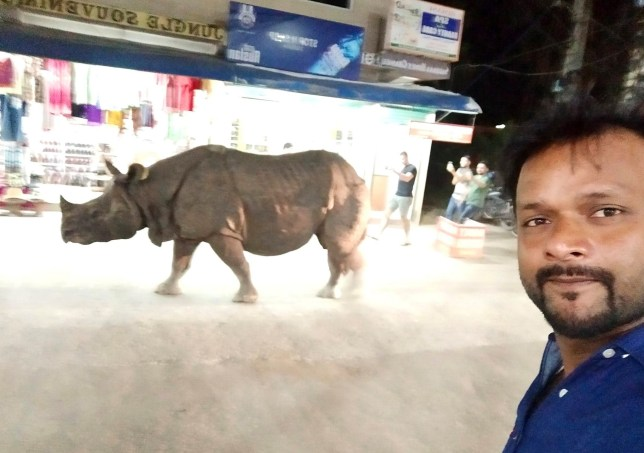Rhino walking through market