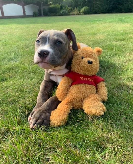 Winnie cuddling a toy