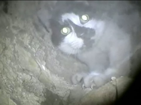 Cat finally rescued after six days stuck up a chimney