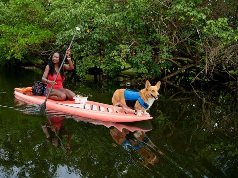Airbnb introduces ethical animal experiences for tourists worldwide