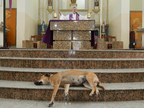 Brazilian priest brings in stray dogs to Sunday mass so families can adopt them
