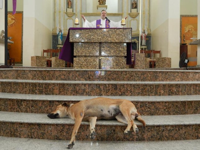 Dog in front of Sunday service at Brazilian church