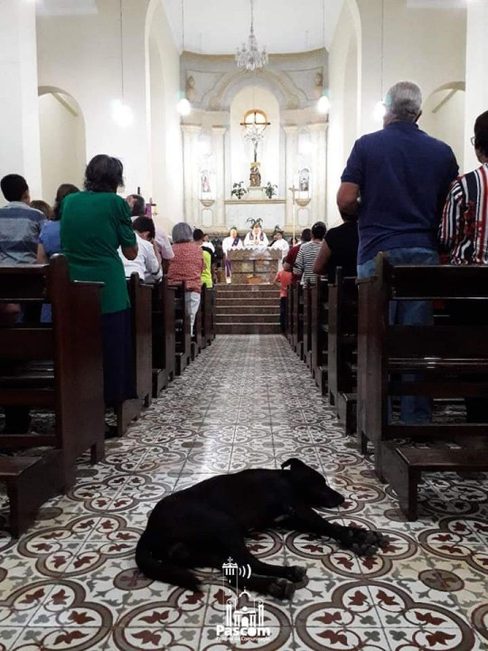 Dog sleeping in church