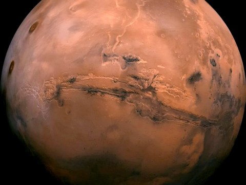 'There is life on Mars': Scientist claims Nasa photos show alien insects on the Red Planet
