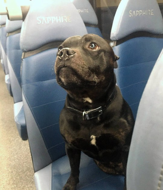 Dated: 27/10/2019 A RUFF RIDE ... This adventurous dog, called Alfie, managed to clamber onto a bus by itself and take a seat on the Arriva vehicle during a late night journey yesterday in Darlington, travelling for almost an hour before anyone noticed he was alone. See story North News