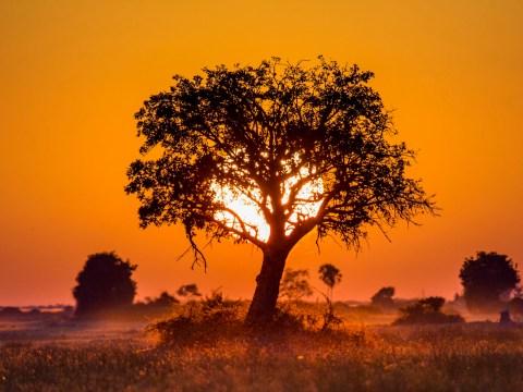 Ancestral homeland of earliest human ancestors traced to Botswana