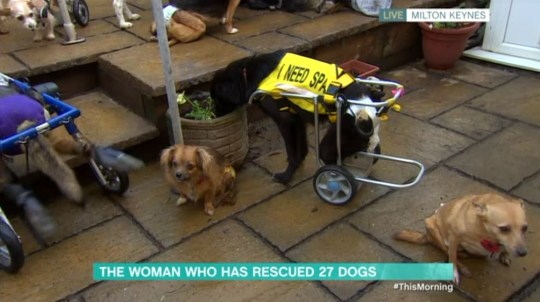 Woman rescues 27 paralysed dogs